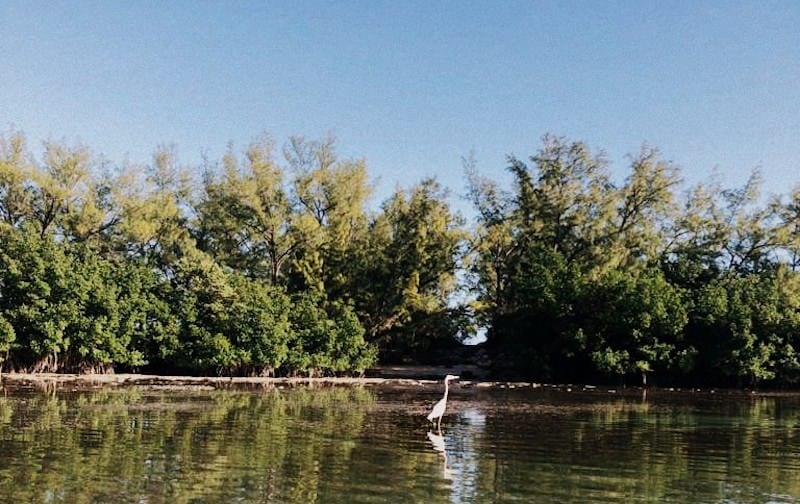 Discover Miami's mangrove and its wildlife